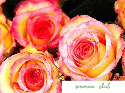 What color roses give mother-in?